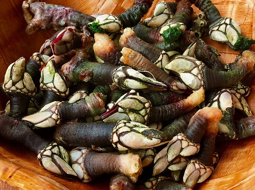 Percebes goose neck barnacles food Galicia art travel photo