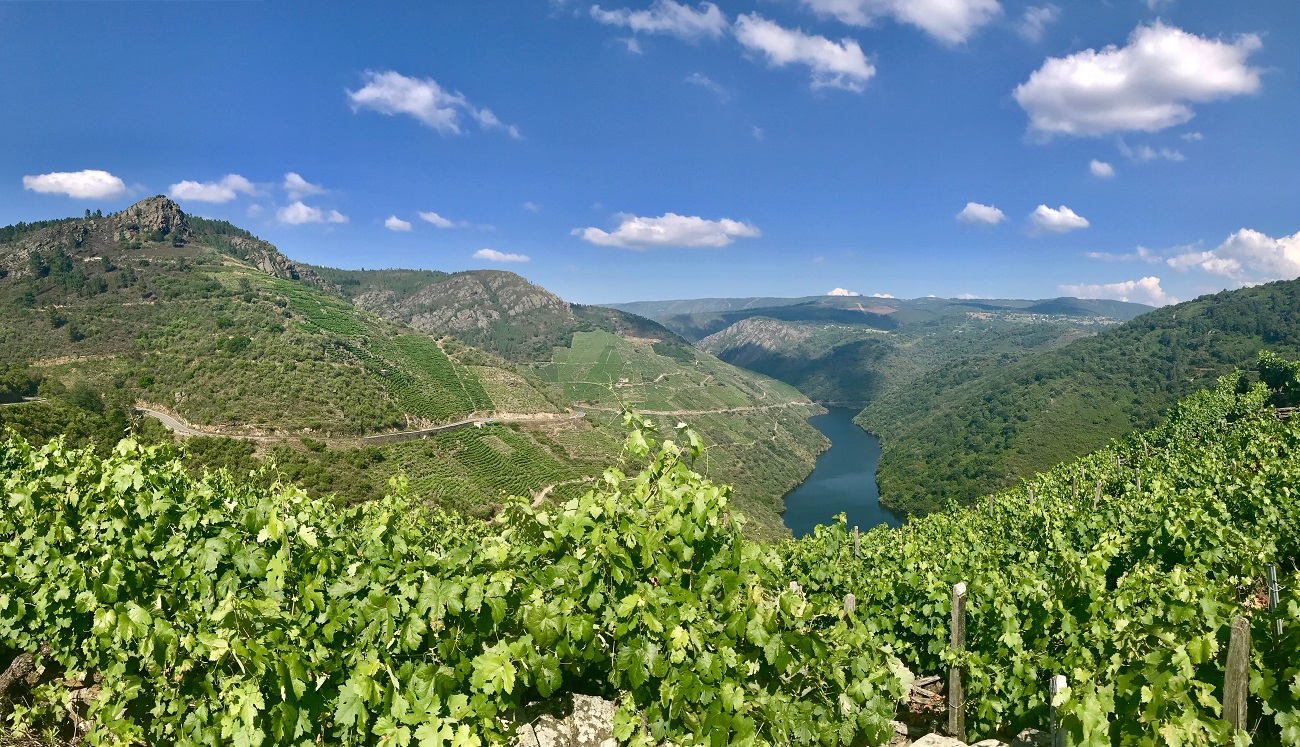 Canon do Sil, Ribeira Sacra Panton wine vino mencia landscape galicia photo art travel