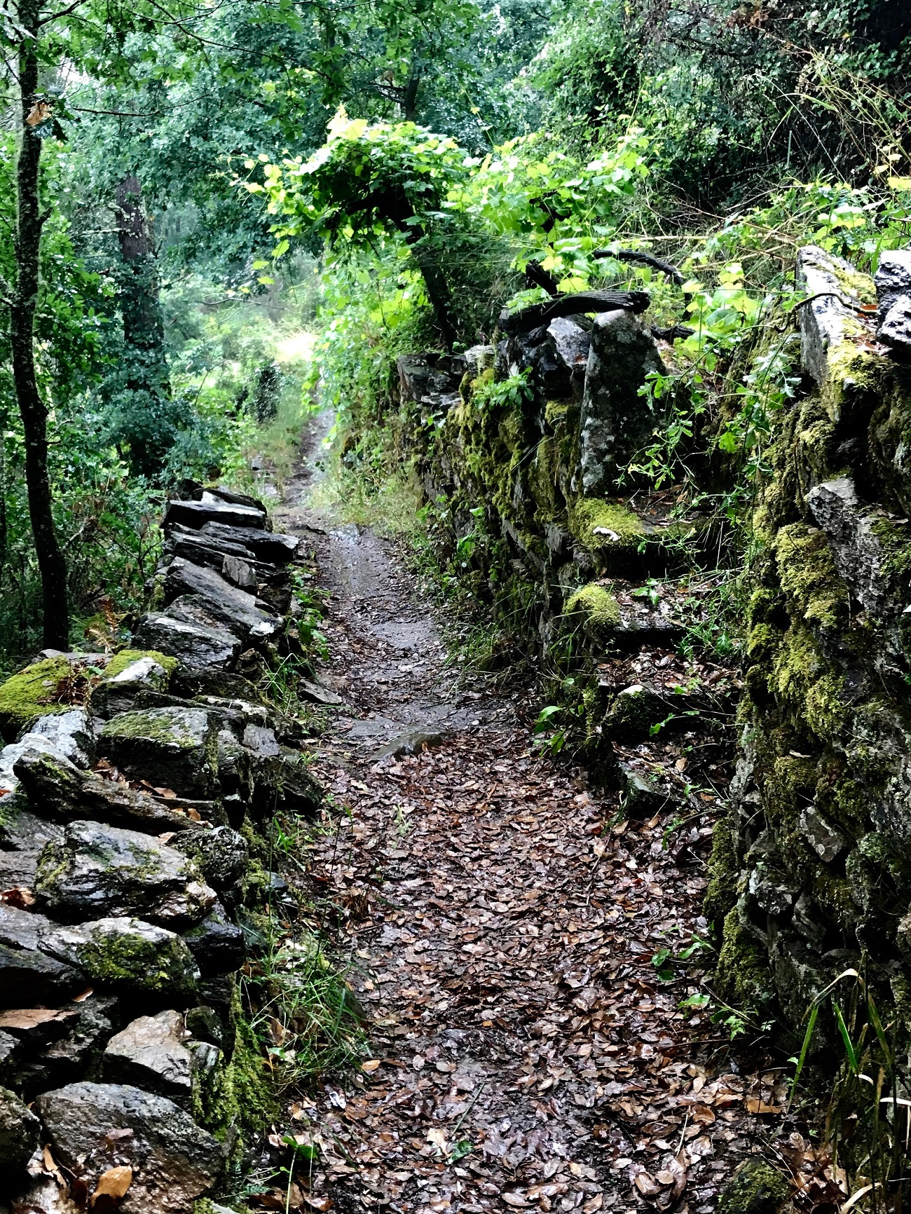 Trail Fervenza de Augacaida, Panton ribeira sacra galicia cascadas waterfalls hiking walks photo art travel