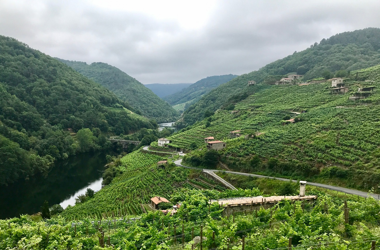 Winery Os Ciprese, Rio Mino ribeira sacra Galicia landscape photo grapes vines vides mencia uvas art travel