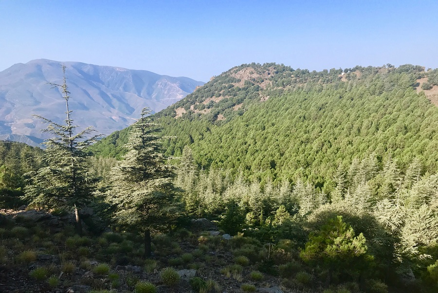 pine trees plantations alpujarras sierra nevada spain gr7 hiking walking path photo landscape art travel